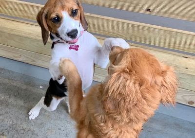 Cookie-and-Evie-dancing at the dog ranch